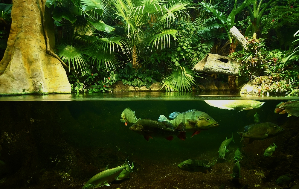 Topiho fototip – exotika berlínského Aquaparku