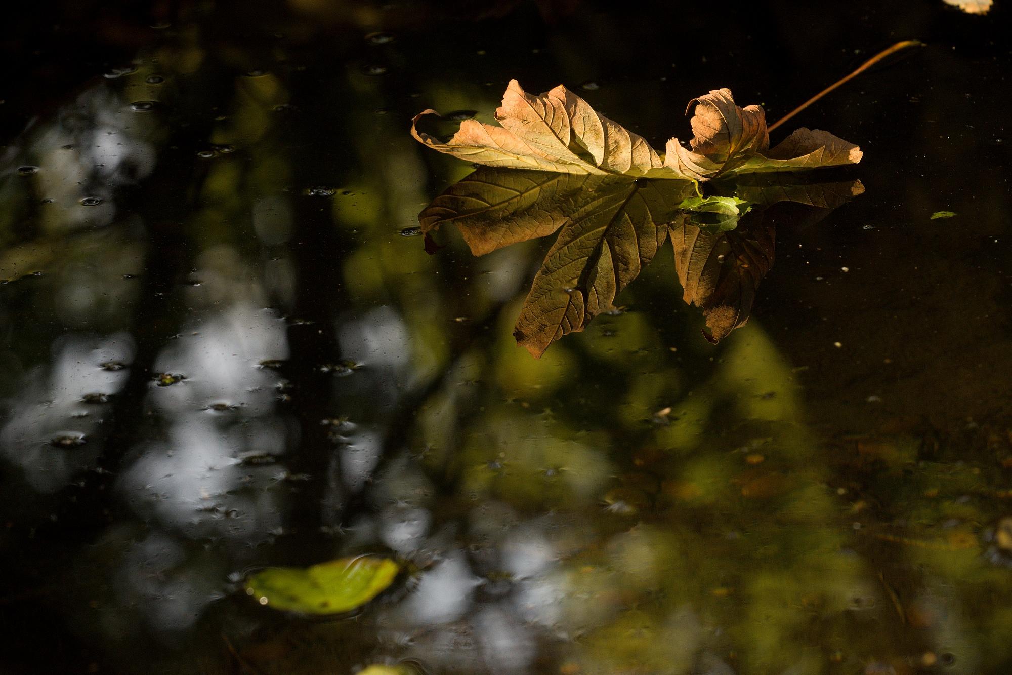 Podzimní odrazovka