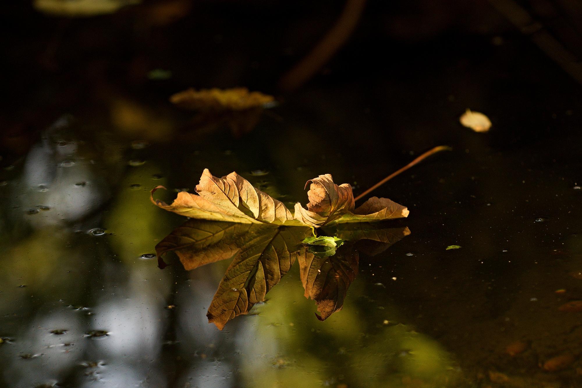 Podzim na střed