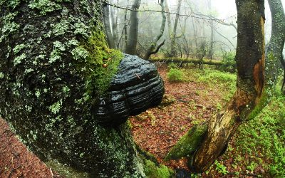 Kam za focením: Čarokrásný Dvorský les